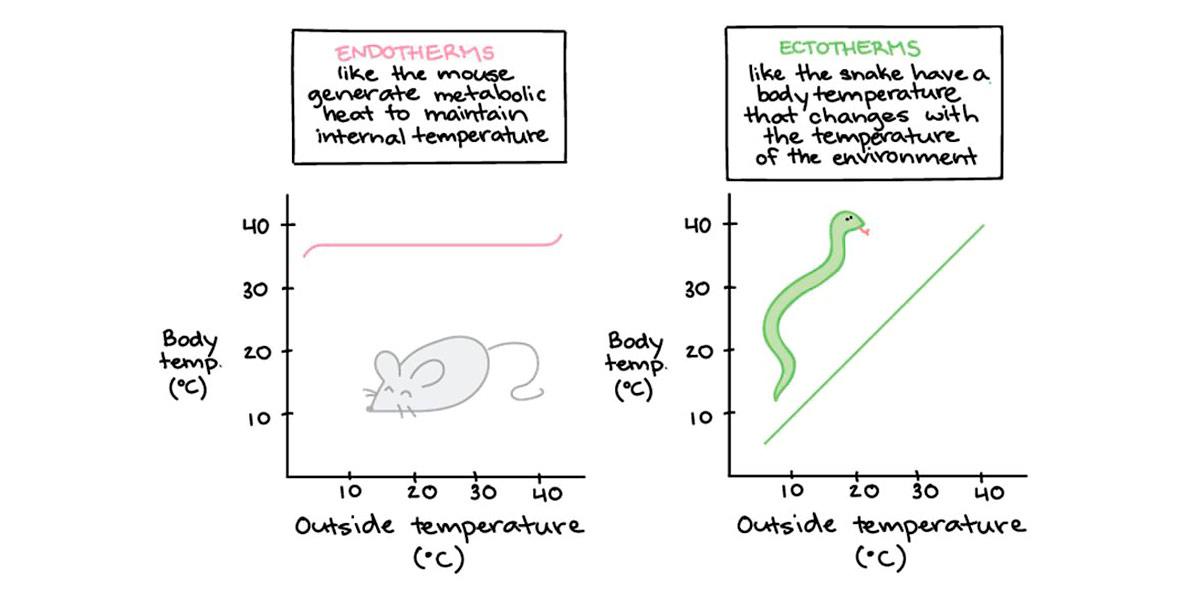 biomarcatori temperatura