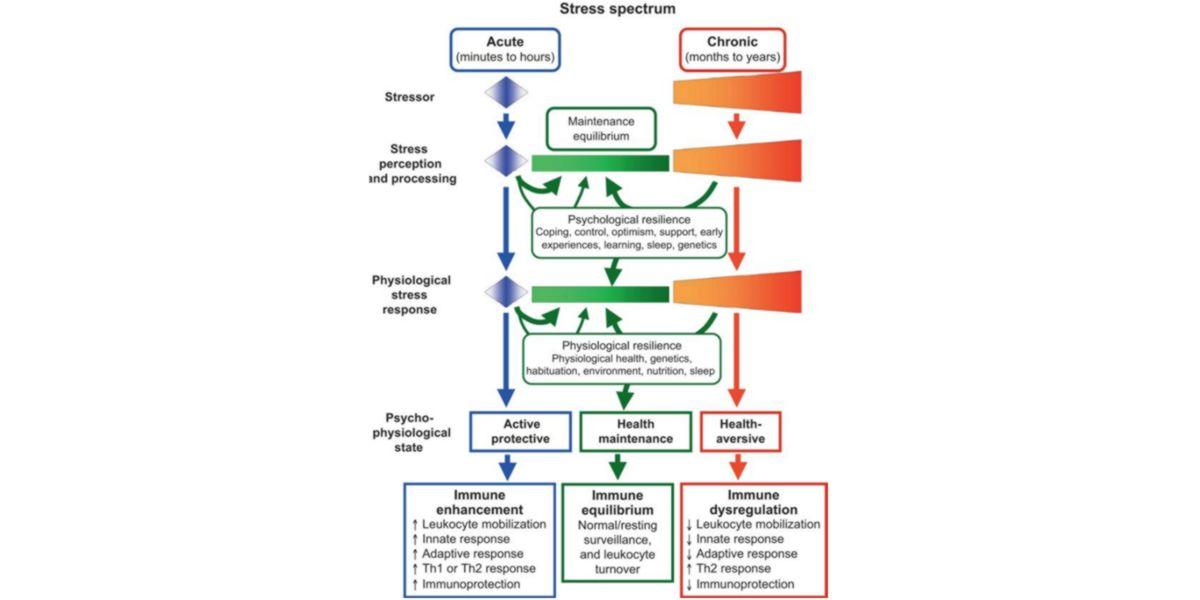 effetti stress coronavirus