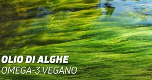 Olio di alghe