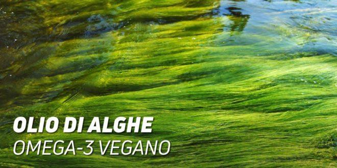 Olio di Alghe: Omega 3 Vegano