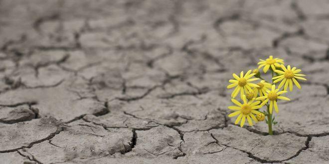 Resilienza – L'Abilità Più Importante nella Tua Vita