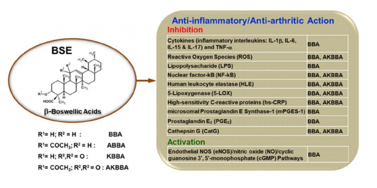 Azione Antinfiammatoria