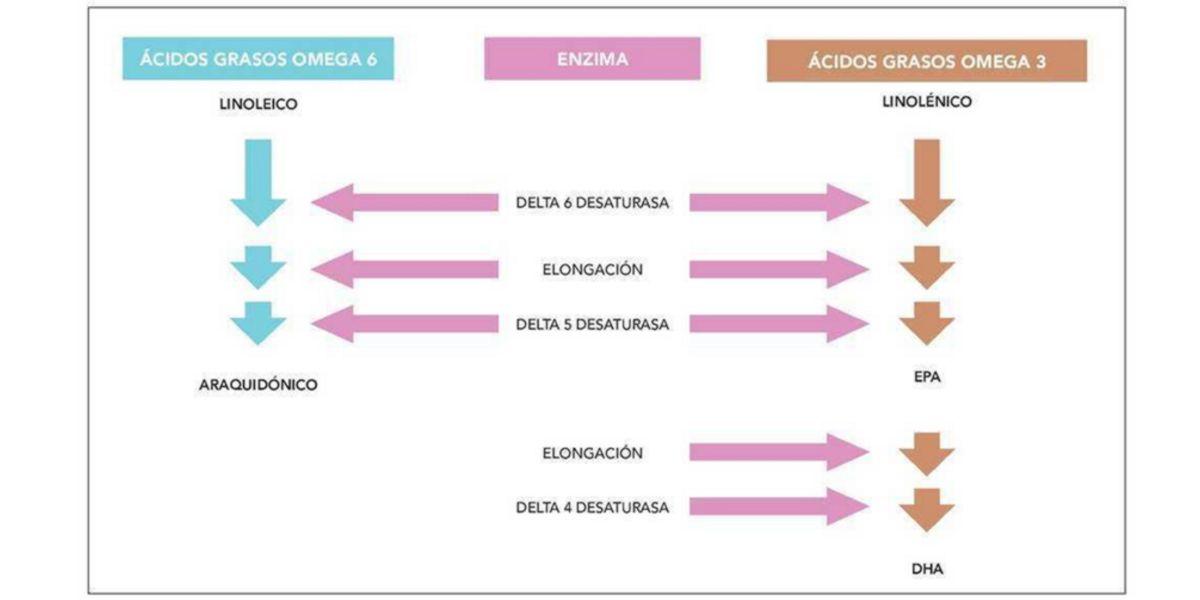 Biosintesi