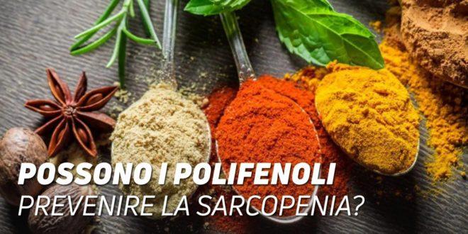 I polifenoli potrebbero prevenire la sarcopenia?