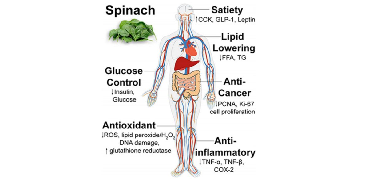 Benefici degli spinaci