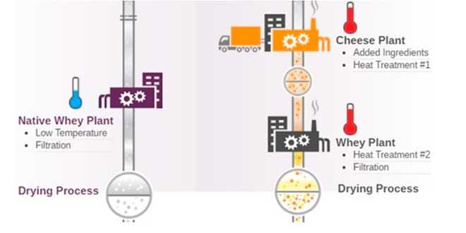 Qul è l'elaborazione della Native Whey Protein?