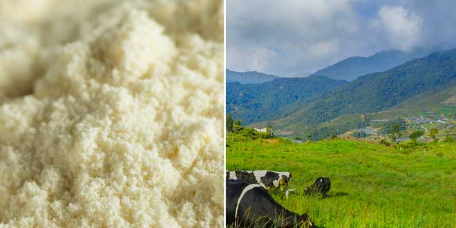 Proteina del Siero del Latte Nativa