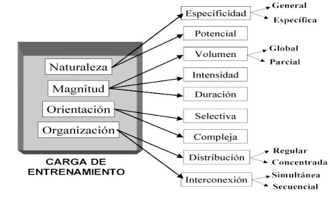 Figura 1 di allenamento di forza per principianti