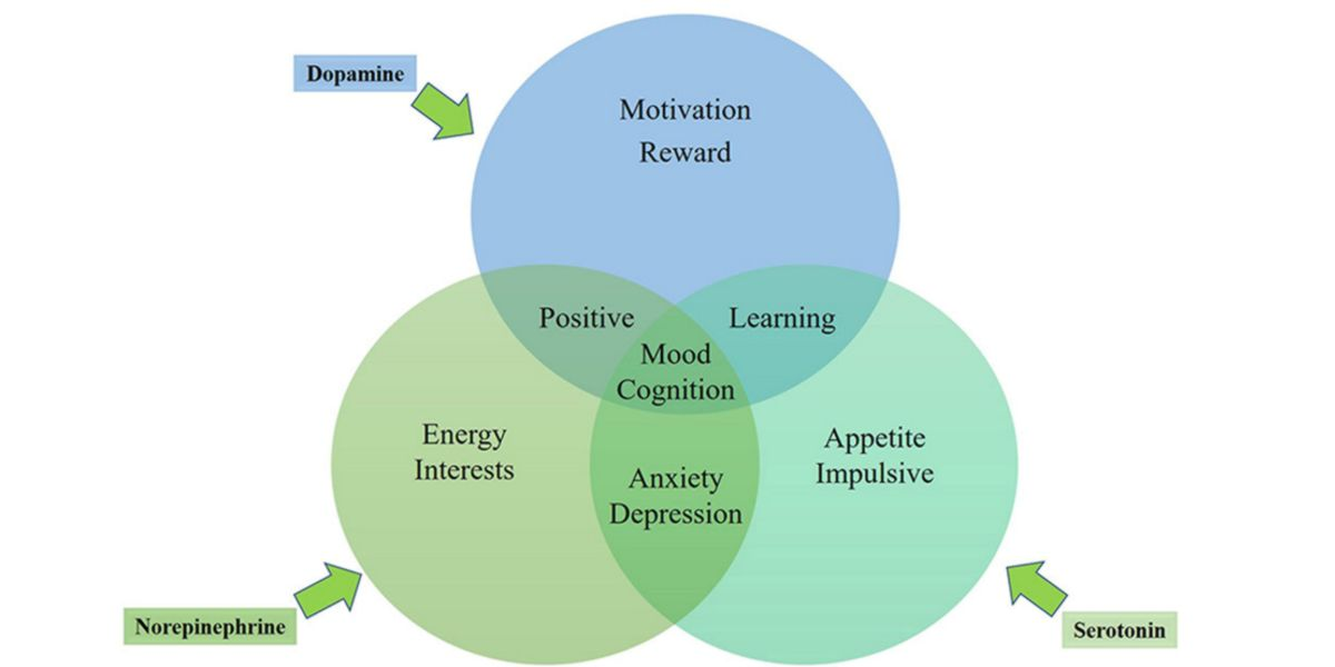 Effetti e interrelazioni tra: Dopamina, Noradrenalina e Serotonina.