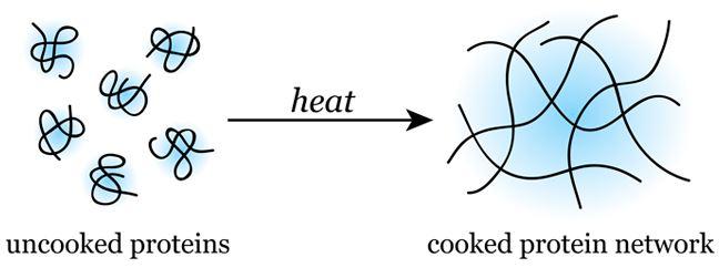La dénaturation des protéines
