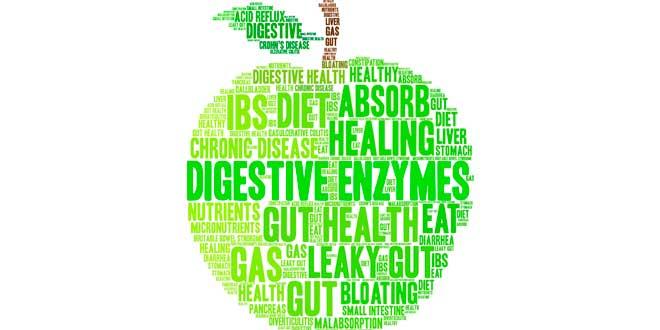 Enzymes digestives et santé