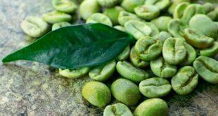 Café vert, grain