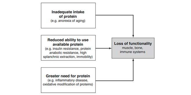 Besoins en protéine