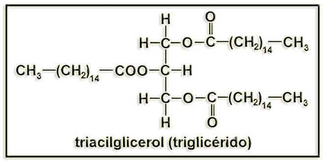 Structure molléculaire des triglycérides