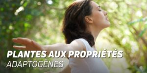 Plantes aux propiétés adaptogènes