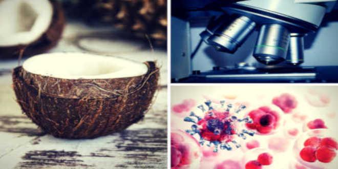 Huile de coco, recherches