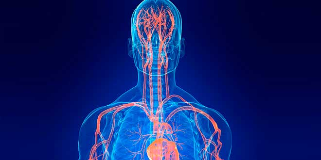 L-arginine, production d'oxyde nitrique et hypertrophie musculaire