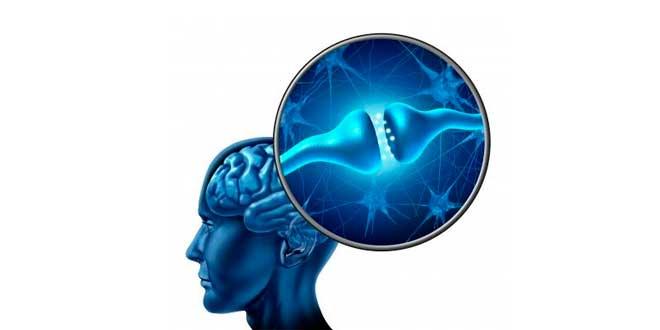 Phosphatidylsérine synapse