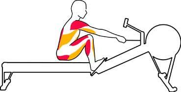 Muscles sollicités catch