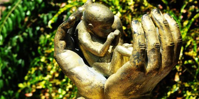 La biotine est nécessaire pour le développement du foetus