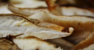 Tranche de champignon shiitake