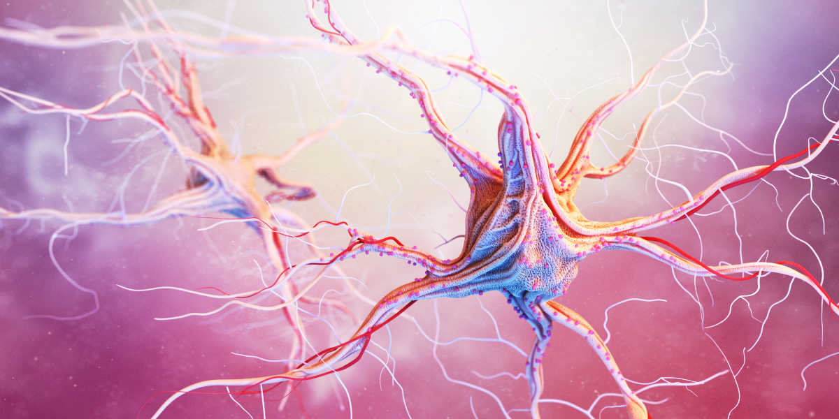 B12 pour le système nerveux