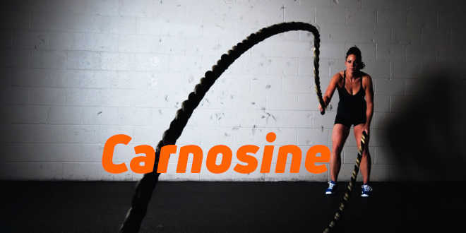 Carnosine – Tout ce que vous devez savoir