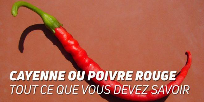Cayenne ou Piment Rouge – Tout ce que vous devez Savoir!