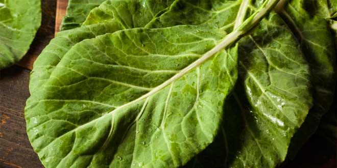 Légumes riches en calcium