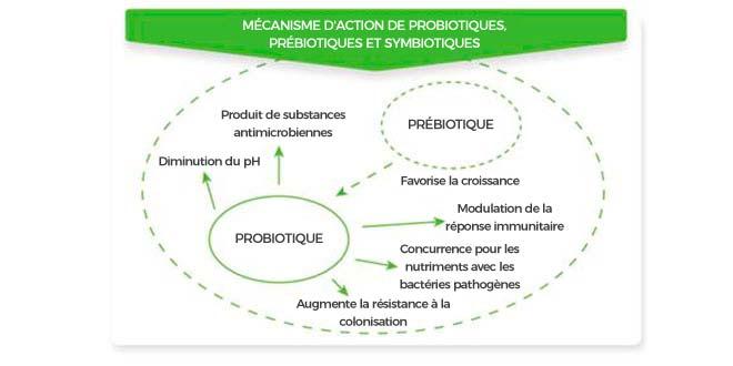 Mécanisme d'action des probiotiques