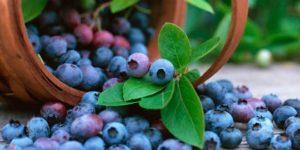 Açaï Berry