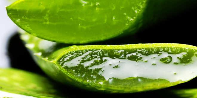 Aloe vera comme gel naturel