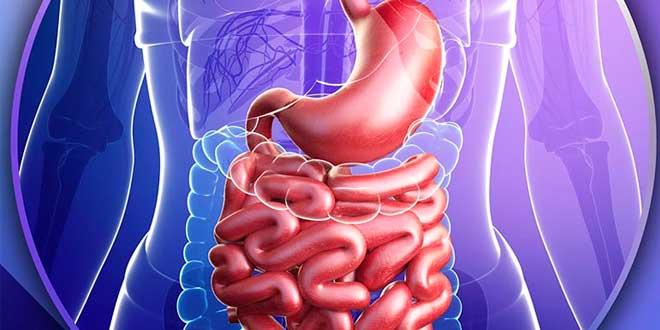 Intestin perméable