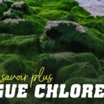 L´algue chlorella pour en savoir plus