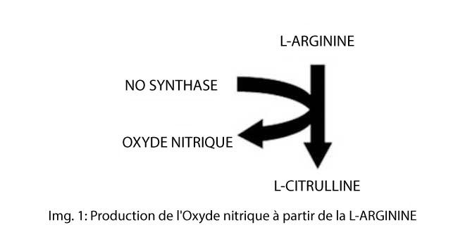 L-arginine, synthèse