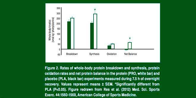 Étude de l'augmentation de protéine le soir