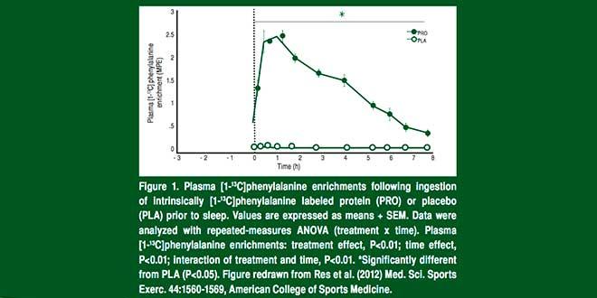 Étude à propos de la protéine -1