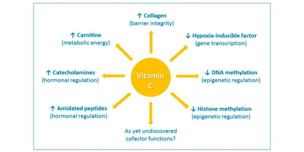 Effets de la complémentation avec vitamine C