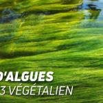 Huile d'algues