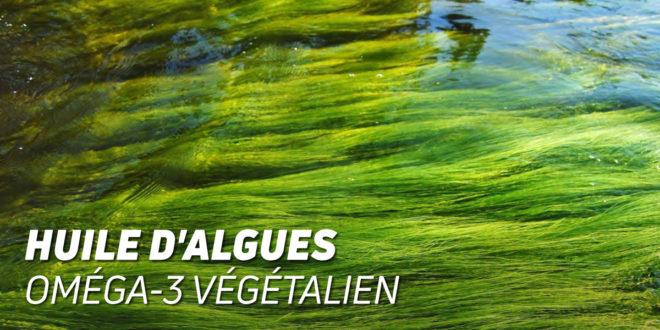 Huile d'Algues : Oméga 3 Végétalien