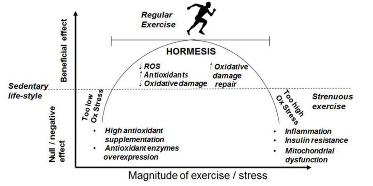 courbe hormétique