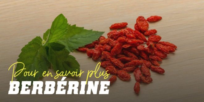 La Berbérine: un remède thérapeutique polyvalent
