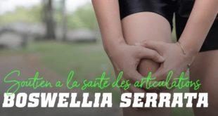Boswellia serrata soutien a la sante des articulations