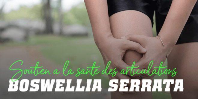 Boswellia Serrata: Remède Naturel contre les Douleurs Articulaires
