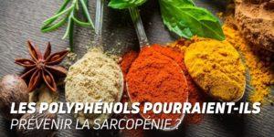 Les polyphénols pourraient-ils prévenir la sarcopénie