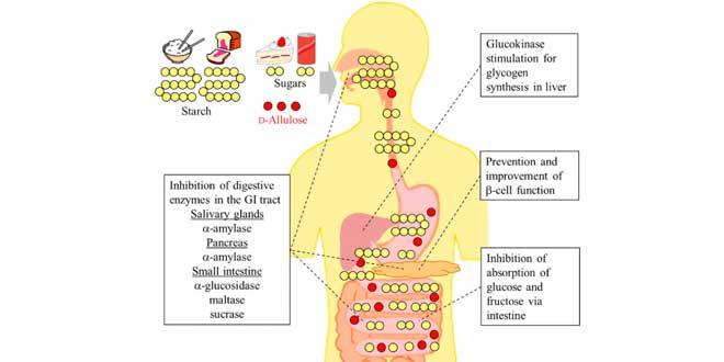 Santé digestive
