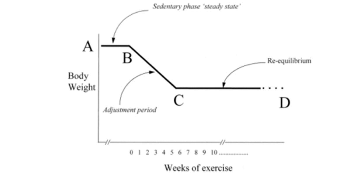 Les effets des exercices physiques