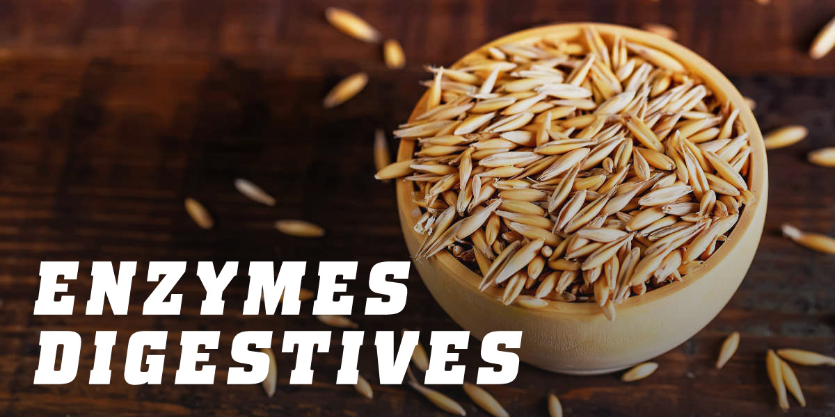 Enzymes digestives