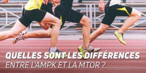 Quelles sont les différences entre l'AMPK et la mTOR?