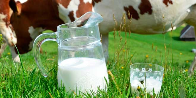 Le lait de vache est-il la meilleure protéine Why Native ?